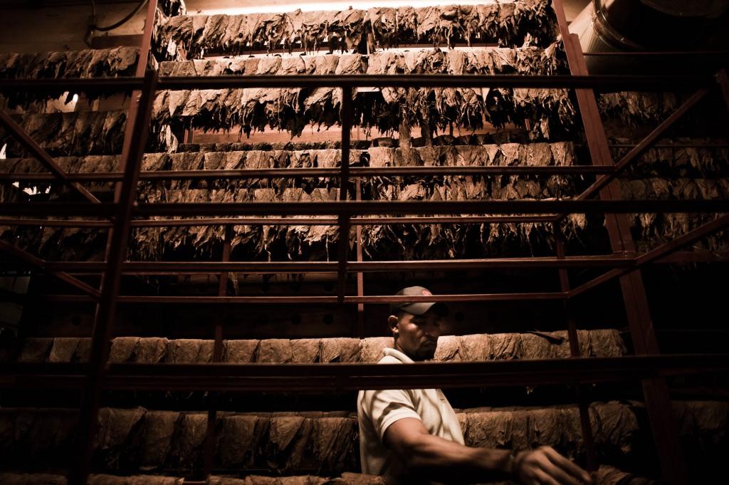 Handmade cigar production. Manufacture worker. Tabacalera de Gar