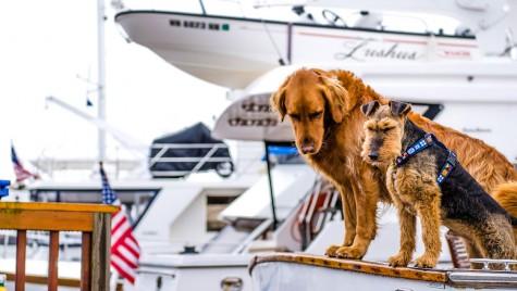 Bunele maniere în marină. Eticheta de ponton.